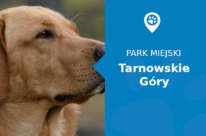 Labrador w Parku Miejskim Tarnowskie Góry