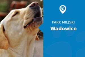 Labrador w Parku Miejskim Wadowice