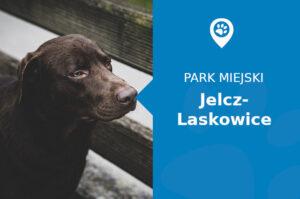 Labrador w Parku Miłośników Jelcza Jelcz-Laskowice