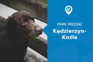 Labrador w Parku Orderu Uśmiechu Kędzierzyn-Koźle