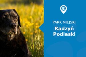 Labrador w Parku pałacowym Radzyń Podlaski