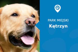 Labrador w Parku Plac marszałka Józefa Piłsudskiego Kętrzyn