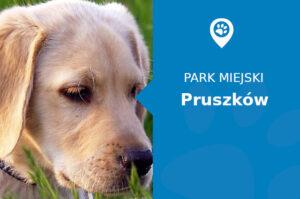 Labrador w Parku Potulickich Pruszków
