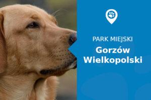 Labrador w Parku Siemiradzkiego Gorzów Wielkopolski