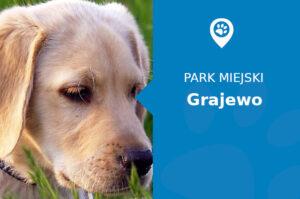Labrador w Parku Solidarności Grajewo