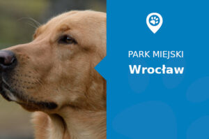 Labrador w Parku Szczytnickim Wrocław