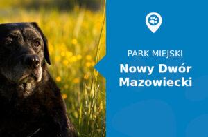 Labrador w Parku Trzech Kultur Nowy Dwór Mazowiecki