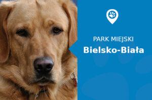 Labrador w Parku Włókniarzy Bielsko-Biała