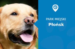 Labrador w Parku Wolności Płońsk