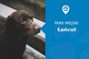 Labrador w Parku Zamkowym Łańcut