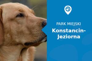 Labrador w Parku Zdrojowy im. hrabiego Witolda Skórzewskiego Konstancin-Jeziorna