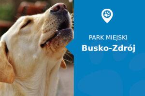Labrador w Parku Zdrojowym Busko-Zdrój