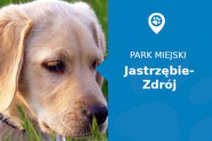 Labrador w Parku Zdrojowym Jastrzębie-Zdrój
