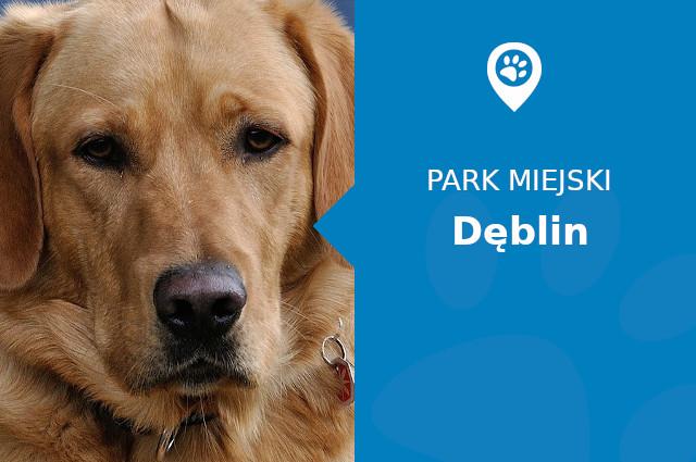 Labrador w Zespole Pałacowo-Parkowym Dęblin