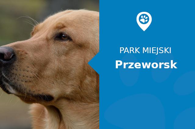 Labrador w Zespole Pałacowo - Parkowym Przeworsk